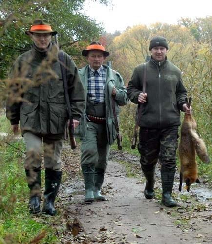 Przy zrytym polu kukurydzy myśliwi mieli nadzieję trafić dzika. Niestety, napotkali tylko lisa.