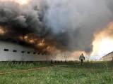 Olbrzymi pożar na fermie drobiu w Wierzbnicy koło Bytomia Odrzańskiego