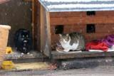 Kocie okno życia oraz pomoc bezdomnym zwierzętom zimą. Pomorska Fundacja Braci Mniejszych z apelem do pomorskich samorządów