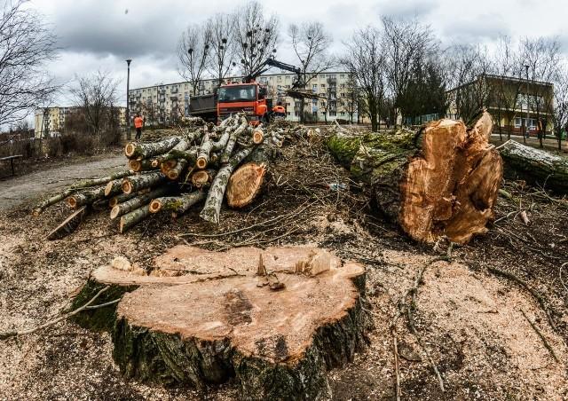 Wycinka drzew w całej Polsce odbywa się zgodnie z przepisami ustawy