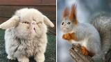 Koty są wszędzie! Internauci pokochali te kocie fotomontaże. Was też śmieszą?