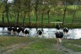 Rzeka Brok: Przyducha wywołana przez oczyszczalnię Mlekovity
