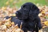 Jesienne zagrożenia czyhają na Twojego psa. Sprawdź na co uważać i zadbaj o bezpieczeństwo swojego pupila
