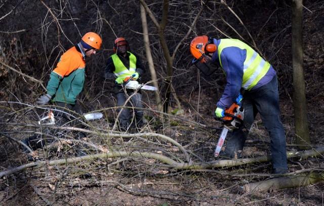 1703 drzewa będą wycięte w rejonie ul. Północnej i gen. Ducha. To pierwszy etap przebudowy skrzyżowania Solidarności - Sikorskiego