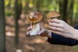 Mandat 500 zł za zbieranie grzybów. Kiedy możesz go dostać? Czego nie wolno robić w lesie? Sprawdź, zanim wybierzesz się na grzybobranie