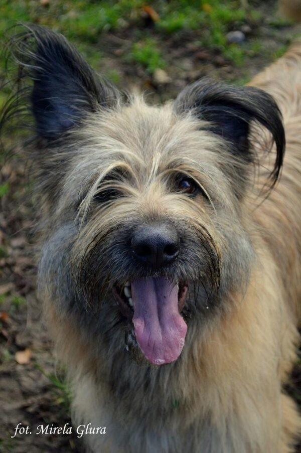 W bydgoskim schronisku dla zwierząt wprowadzono ograniczenia w liczbie odwiedzających. Od 17 października do odwołania zrezygnowano z wizyt wolontariuszy, którzy wyprowadzali psy na spacery. Nie są także przyjmowane osoby na prace społeczne. Nie odbywają się teraz konsultacje z psim behawiorystą, porad, także do odwołania, nie udziela specjalista od spraw kocich.Na zdjęciu Aria - czeka na adopcję. Pytając o nią należy podać numer ewidencyjny: 519/20.