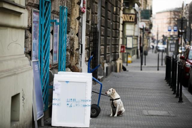 Mężczyzna skazany za okrutne zabicie psa na dwa lata prac społecznych.