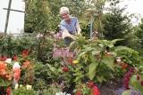 Proste domowe sposoby na szkodniki w ogrodzie: czosnek, papierosy, płyn do mycia naczyń...