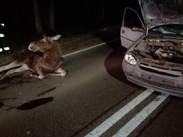 W niedzielę w godzinach wieczornychdoszło do zderzenia auta osobowego marki Opel Corsa z Łosiem.