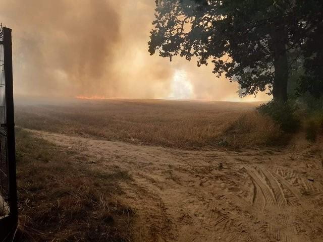 Pożar pola w Zamartem w pow. sępoleńskim. Było niebezpiecznie