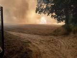 Pożar na polu w Zamartem strawił ponad 20 hektarów. Policjanci ewakuowali uczestników festynu