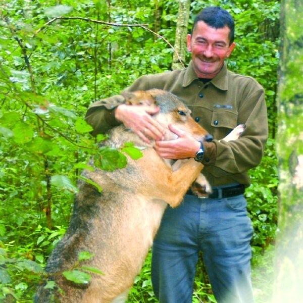 Tylko Ireneusz Mastalerski może tak bawić się z Borysem. To prawdziwy wilk o naturze krwiożerczego drapieżnika.
