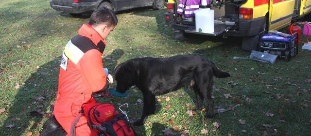 Psy ratowników muszą odpoczywać. W terenie, za każdym razem pracują po kilka godzin.
