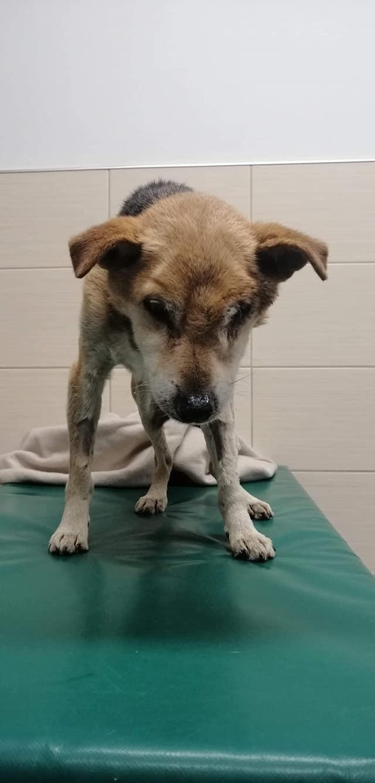 Psi dramat w Bytowie. Umierający pies w silniku auta.