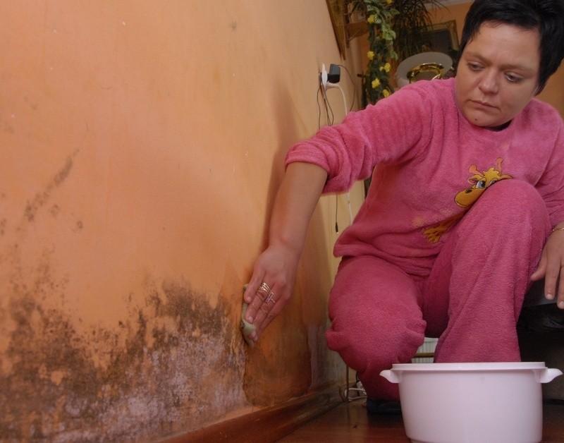 Barbara Hulecka ściera grzyb za swoich ścian.
