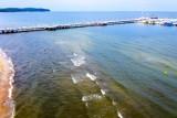 Sinice w Bałtyku 2021. Na te plaże jest zakaz wstępu! MAPA Tutaj kąpiel nie jest dobrym pomysłem. Sinice pod lupą sanepidu