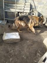 Ponad 50 psów zabranych z hodowli w Niesułkowie. Żyły w tragicznych warunkach. Zdjęcia z hodowli psów w Niesułkowie