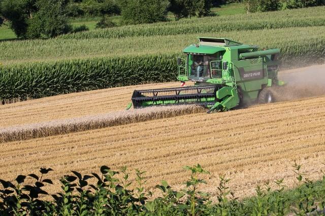 Zbiory zbóż na ogół były wyższe od tych sprzed roku, rzepaku w Polsce uzyskano nawet 21% więcej. Zdecydowanie słabsze okazały się na to zbiory owoców. Tych z drzew mieliśmy 1/3 mniej. Główny Urząd Statystyczny opublikował wynikowy szacunek głównych ziemiopłodów rolnych i ogrodniczych w 2017 r. Zbiory zbóż ogółem ocenia się na 32,2 mln t, tj. około 8% więcej od zbiorów ubiegłorocznych.