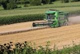 Rok 2017 w rolnictwie - jakie były tegoroczne zbiory? Owoców nawet 1/3 mniej