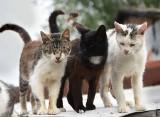 Co się dzieje z tymi kotami w gminie Baranowo!? Strażacy znów musieli interweniować