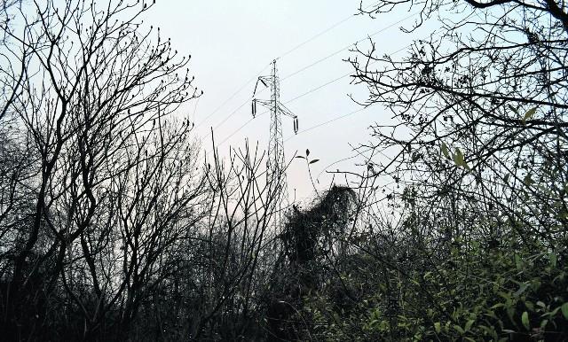 Kupowanie energii elektrycznej w grupie wiele gmin uważa za szansę na oszczędności w budżecie