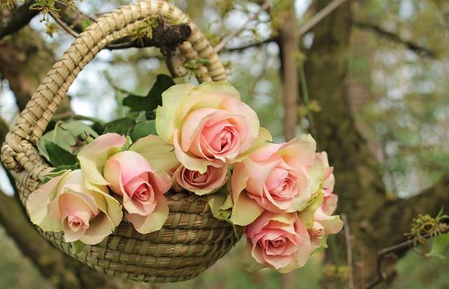 życzenia Dla Anny Imieninowe Wierszyki Sms Gotowe Do