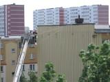 Zagumienna 8. Tragedia malutkich jerzyków. Pracownicy usunęli gniazda (zdjęcia)