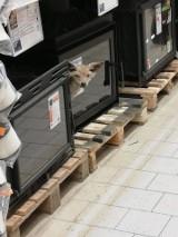 """""""Polowanie"""" na lisa w markecie budowlanym w Inowrocławiu [zdjęcia]"""
