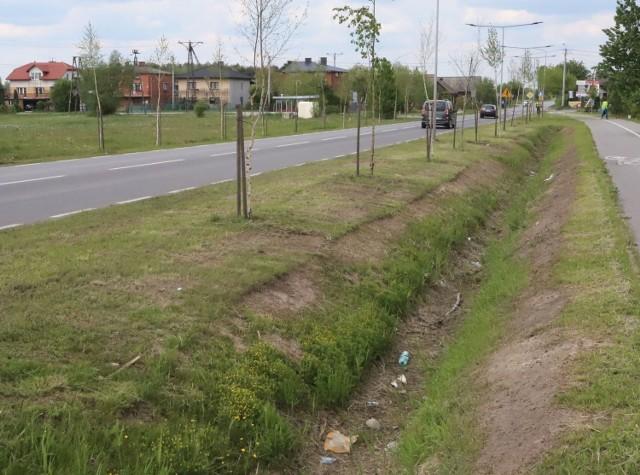 Tak wygląda zniszczony trawnik wzdłuż ulicy Energetyków w Radomiu.