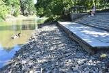 Niski poziom Młynówki w Opolu. Opadająca woda odsłoniła śmieci i infrastrukturę. Wędkarze: Pojawiają się śnięte ryby