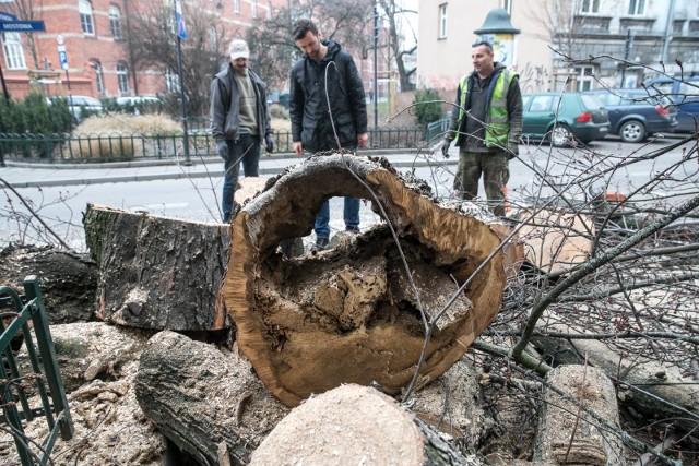 Grudniowa wycinka drzew na Mostowejna Mostowej