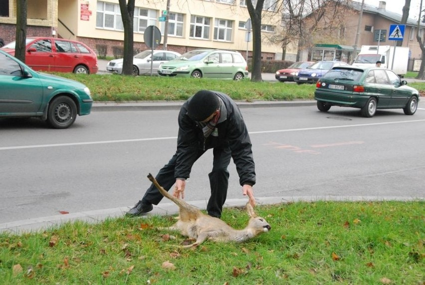 Sarenka, która biegala po ulicach Bialegostoku, nie zyje....