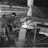 PGR-y miały być dumą rolnictwa [archiwalne zdjęcia]