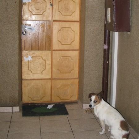 Pod drzwiami Anny M., która zmarła z powodu obrażeń, wciąż stoi jej pies. Sąsiedzi go dokarmiają.