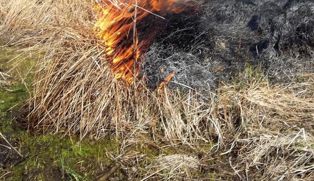 Mieszkaniec Zatora najpierw podpalił łąkę, a potem omal nie padł ofiarą własnego czyny