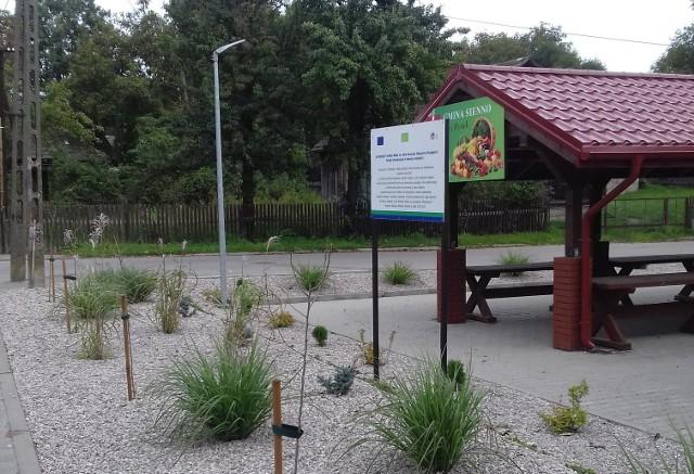 Przy Zielonym Targowisku i Zakładzie Opieki Zdrowotnej pojawiło się 400 nowych roślin.
