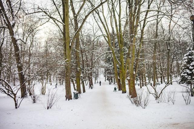 Park Bednarskiego w pięknej, zimowej scenerii