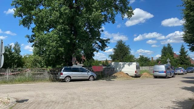Dęby w pobliżu szkoły w Przyborowie są potężne i piękne. Były tutaj zanim zamieszkali najstarsi mieszkańcy