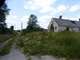 Gmina Grzmiąca walczy z barszczem Sosnowskiego. Oby tym razem skutecznie