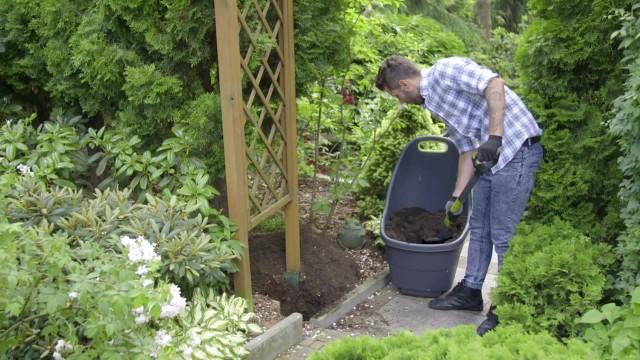 Sadzenie róż pnącychRóże pnące należy sadzić w żyznej, przepuszczalnej glebie. Można też dodać specjalnej ziemi dla róż.