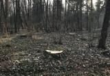 Dymisja za wycinkę drzew w Parku Grabiszyńskim tylko na chwilę. Urzędniczka znów jest dyrektorem