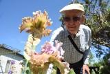 W ogrodzie Józefa Koncewicza znów jest magicznie. Właśnie kwitną tu setki irysów. Taki spektakl barw można podziwiać tylko przez krótki czas