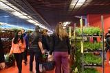 Festiwal Roślin 2021 w Białymstoku. Perełki do domu i ogrodu. Wielka wyprzedaż roślin w Białymstoku. Sprawdź, co można było kupić! (ZDJĘCIA)
