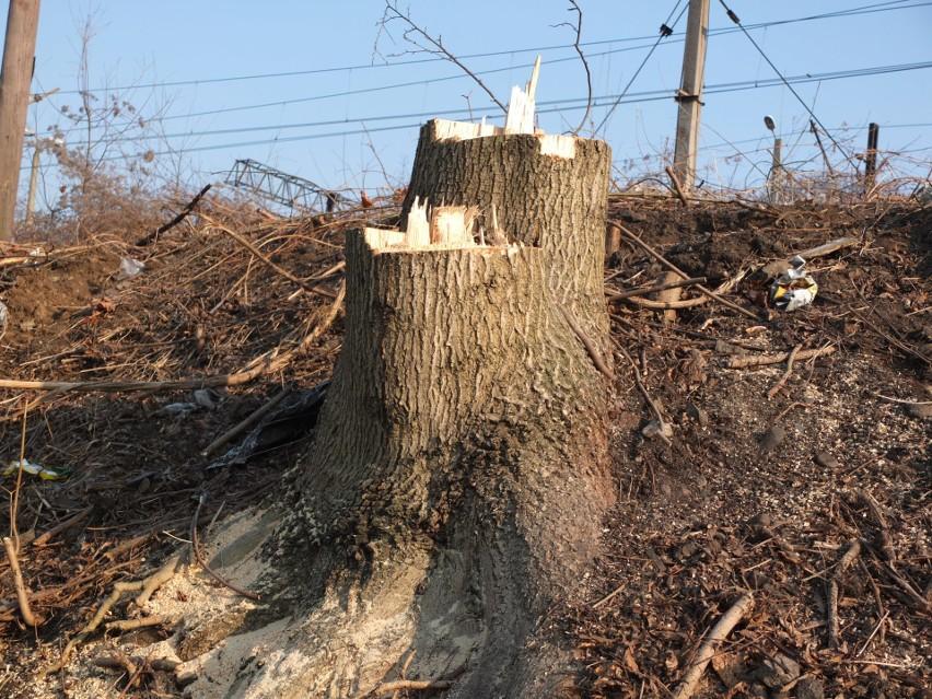 Opole Wschodnie. Wycięto ponad 1200 drzew.