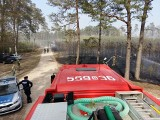 Pożar lasu w Luzinie. Płoną hektary młodego lasu. Z ogniem walczy 10 zastępów straży pożarnej [zdjęcia]