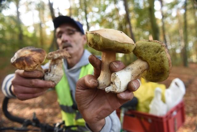 Gdzie na grzyby? W jakich miejscach zbierać grzyby? Sprawdź te miejsca na grzybobranie!