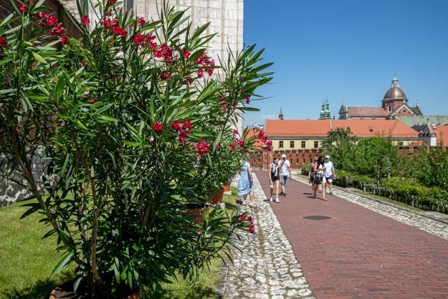 """""""Ogrody, Dziedzińce, Kościół św. Gereona"""" to jedna z najbardziej urokliwych wawelskich tras dla turystów"""