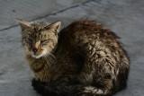 Poznań: Na Starołęce mieszkańcy znaleźli martwego kota. Był przecięty na pół. Nie będą szukać sprawcy?