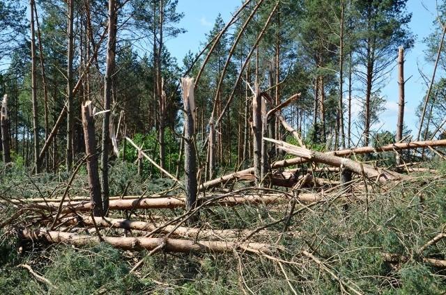 W czwartek 29.06.2017 r. przez woj. podlaskie przeszła ogromna wichura. Wiatr zrywał dachy i uszkadzał linie energetyczne. Regionalna Dyrekcja Lasów Państwowych w Białymstoku udostępniła dzisiaj zdjęcia pokazujące, jakie straty wiatr spowodował w lasach.