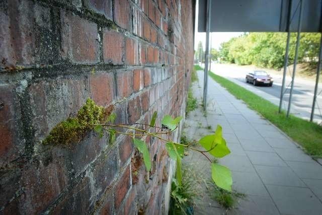 Mur wzdłuż ulicy Podgórskiejmur